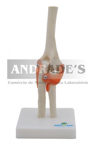 Articulações do cotovelo - SD-5017