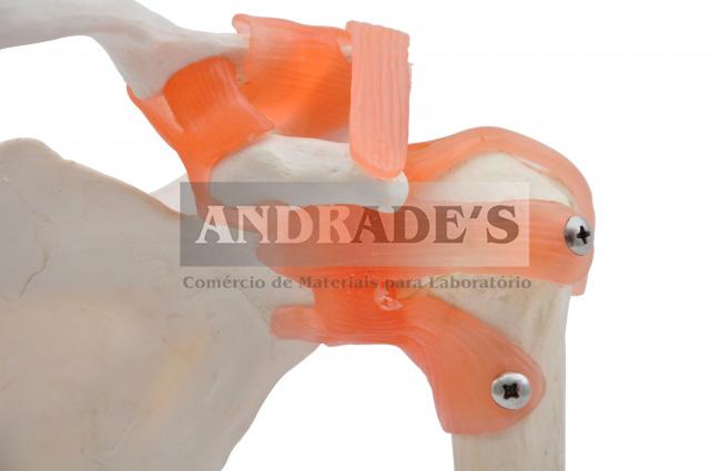 Articulações do ombro - SD-5016