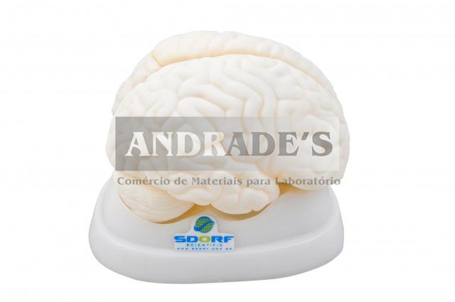 Cérebro em tamanho natural em 3 partes - SD-5039