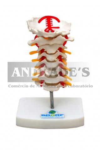 Coluna cervical - SD-5010