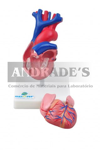 Coração em tamanho natural em 2 partes - SD-5047