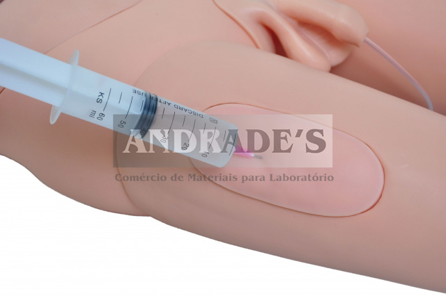 Manequim bissexual adulto c/ órgãos internos p/ treino de enfermagem de 1,70 - S