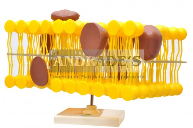 Membrana celular - SD-5074