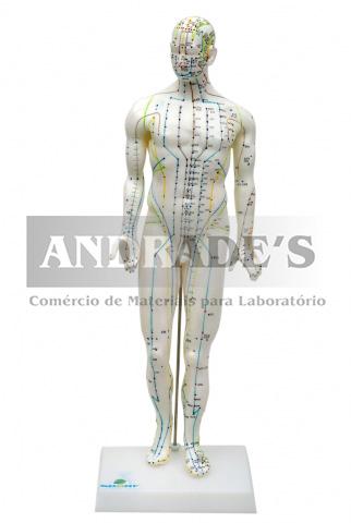 Modelo de acupuntura masculino de 50 cm - SD-5098