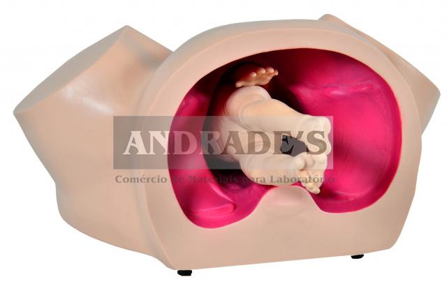 Simulador de parto básico -SD-4011/B