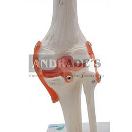 Articulação do joelho - SD-5020