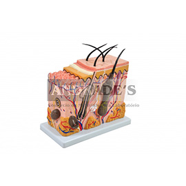Corte de pele em bloco - SD-5053