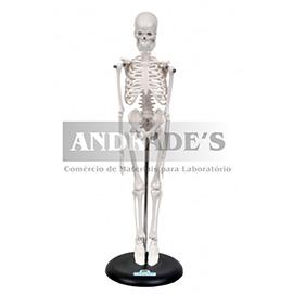 Esqueleto humano de 45 cm c/ suporte - SD-5002/B