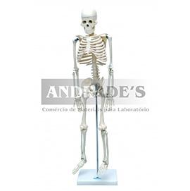 Esqueleto humano de 85 cm c/ suporte - SD-5002