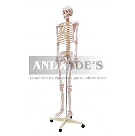 Esqueleto humano padrão de 1,70 c/ suporte, haste e rodas - SD-5000