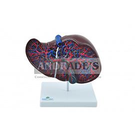 Fígado luxo - SD-5049