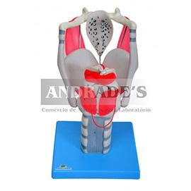 Laringe funcional 3,5 x o tamanho natural - SD-5041/B