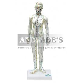 Modelo de acupuntura feminino de 50 cm - SD-5099