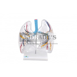 Pulmão transparente - SD-5055