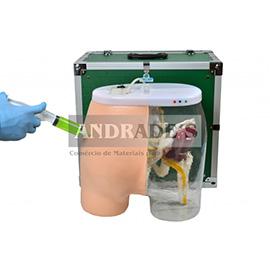 Simulador de injeção intramu. glúteo e visualização óssea - SD-4009B