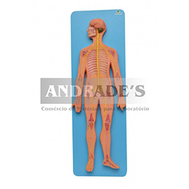 Sistema nervoso central e periférico - SD-5060