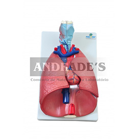 Sistema respiratório em 7 partes - SD-5062