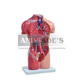 Torso humano feminino de 42 cm c/ 15 partes - SD-5024