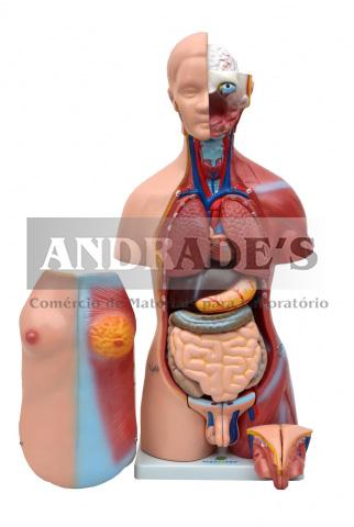 Torso humano bissexual c/ abertura nas costas de 45 cm c/ 24 partes - SD-5022/B
